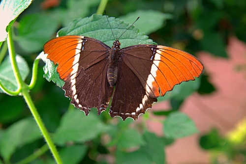 Two tone butterfly Stock Photo