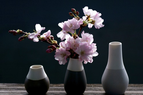 Vase cherry blossom flower arrangement Stock Photo