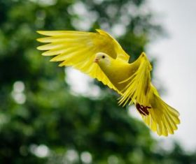Yellow bird with spread wings to fly Stock Photo