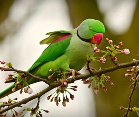 a cute green parrot standing on twigs Stock Photo