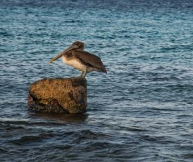 bird pelican Stock Photo