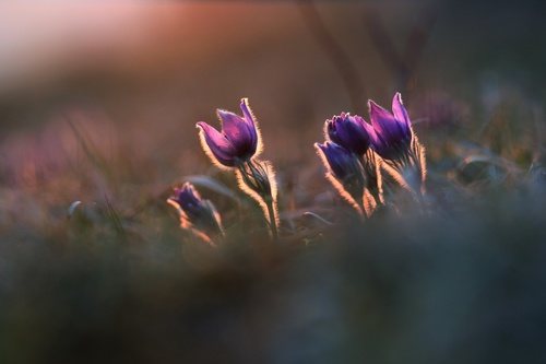 blurred outdoors plants purple flowers Stock Photo
