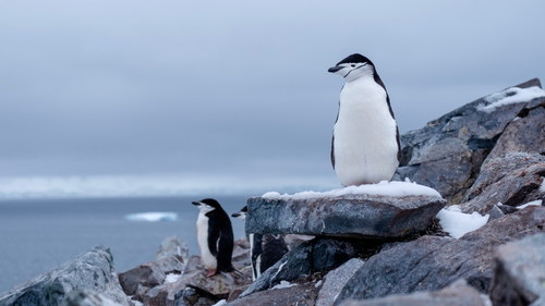 Cute Antarctic penguin Stock Photo