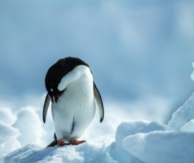 Cute little penguin Stock Photo