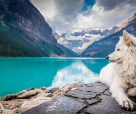 Dog kneeling by the blue lake Stock Photo