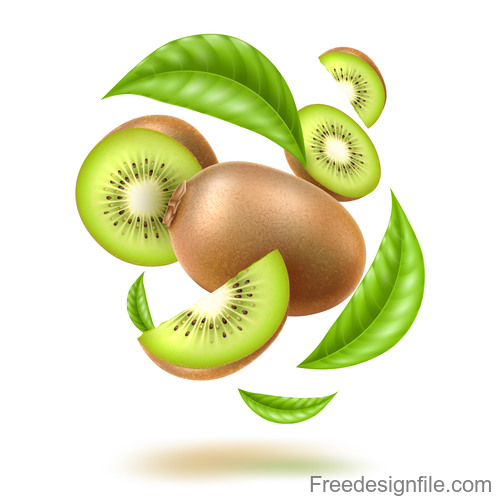 Fresh Kiwifruit vector illustration material