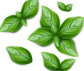 Fresh green leaves vector illustration 01