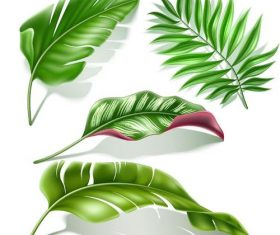 Fresh green leaves vector illustration 02