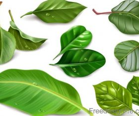 Fresh green leaves vector illustration 03