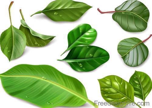 Fresh green leaves vector illustration 03