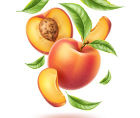 Fresh peach vector illustration material
