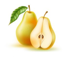 Fresh pear vector illustration material