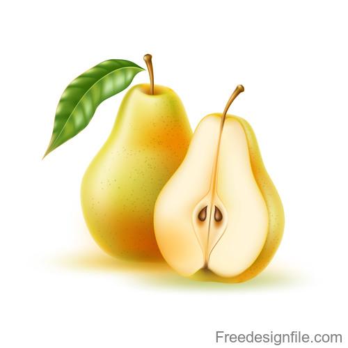 Fresh pear vector illustration material