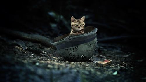 Kitten hidden in the helmet Stock Photo