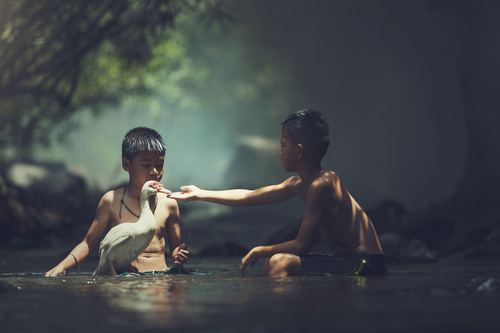 Little boy gives duck water Stock Photo
