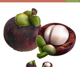 Mangosteen illustration vector material