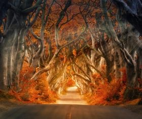 Mysterious Tree Tunnel Irish Dark Hedge Stock Photo