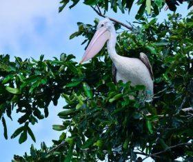 Pelican on the tree Stock Photo
