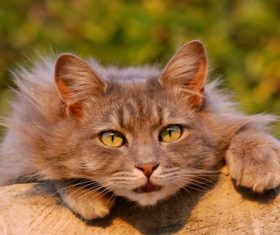 Portrait of cute cat Stock Photo