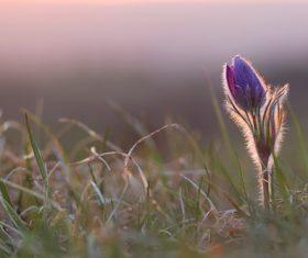 Purple flower on the grass Stock Photo