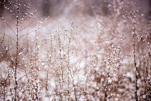 Snow in bush Stock Photo