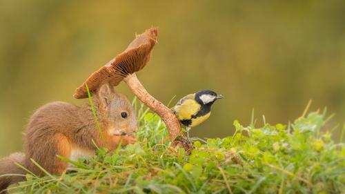 Squirrel mushroom and bird Stock Photo 01
