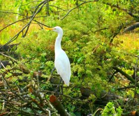 Stock Photo Egret standing on the tree 01