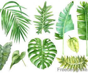 Tropical leaves illustration vectors set 01