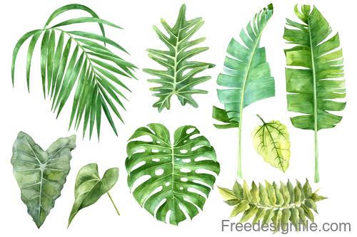 Tropical leaves illustration vectors set 01