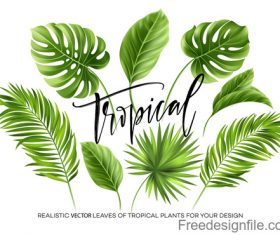 Tropical leaves illustration vectors set 02