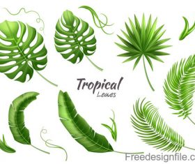 Tropical leaves illustration vectors set 03