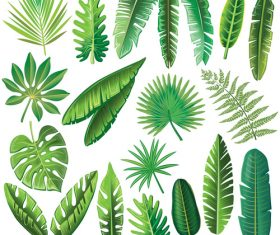 Tropical leaves illustration vectors set 04