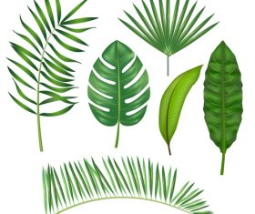 Tropical leaves illustration vectors set 05