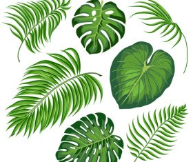 Tropical leaves illustration vectors set 06