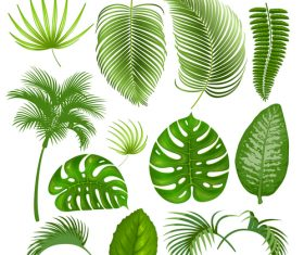 Tropical leaves illustration vectors set 07