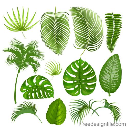 Tropical Leaves Illustration Vectors Set 07 Free Download Tropical palm leaf illustration png image. tropical leaves illustration vectors