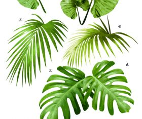 Tropical palm leaves vector background