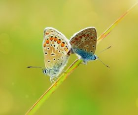 Two butterflies on a grass Stock Photo