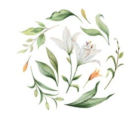 Watercolor lilies flower vector illustration 04