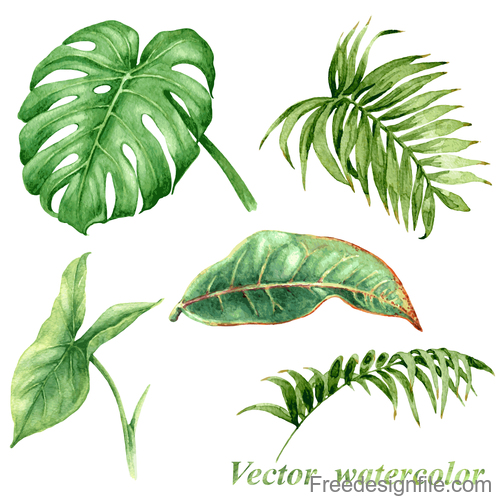 Watercolor tropical leaves vector illustration
