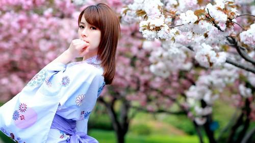 Wearing kimono woman watching cherry blossoms Stock Photo