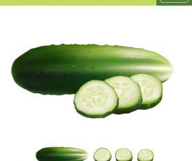 cucumber illustration vector material