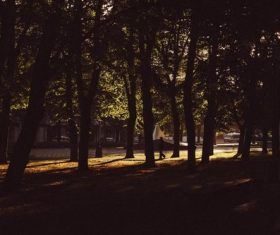 nature walking forest trees Stock Photo