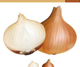 onion illustration vector material