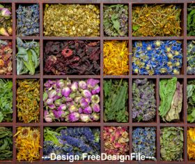 Different Flower Tea Stock Photo