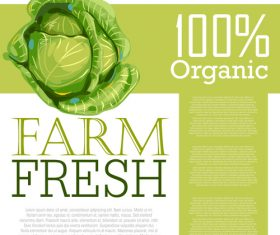 Fresh Organic Cabbage Ad Template vector