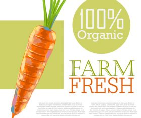 Fresh Organic Carrots Ad Template vector