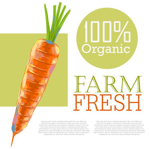 Fresh Organic Carrots Ad Template vector