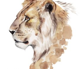 Lion hand drawn watercolor animals vector