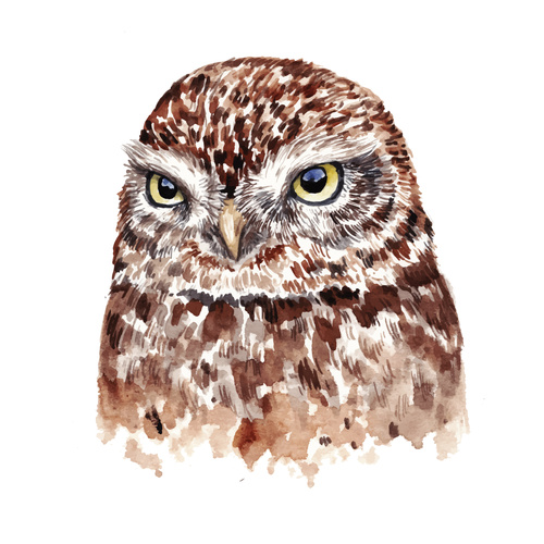 Owl hand drawn watercolor animals vector